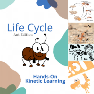 ant life cycle study